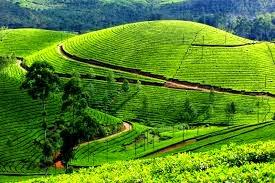 मुन्नार, केरल  (Munnar Kerala)